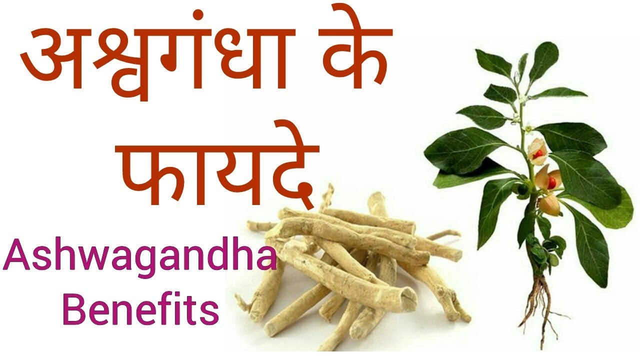 Ashwagandha Health Benefits And Side Effects For Body Building